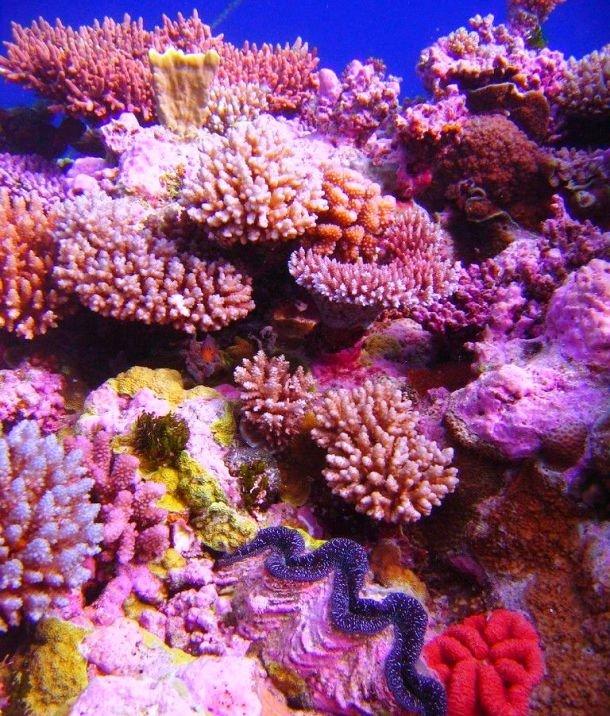 красивый риф