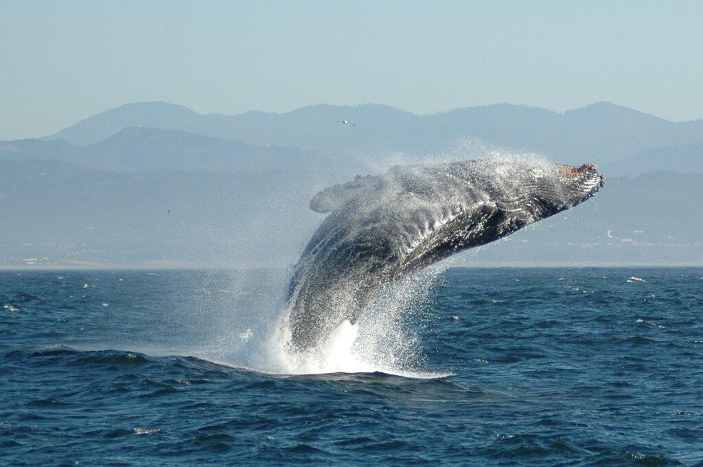Топ 10 самых крупных китов на планете Земля