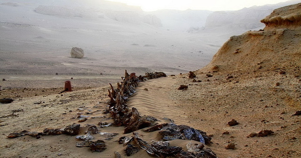 Намибия. Берег Скелетов
