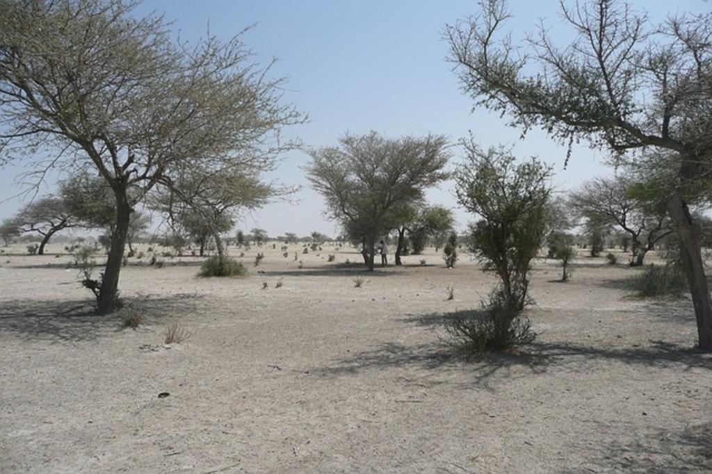 Северная Африка, Сахель