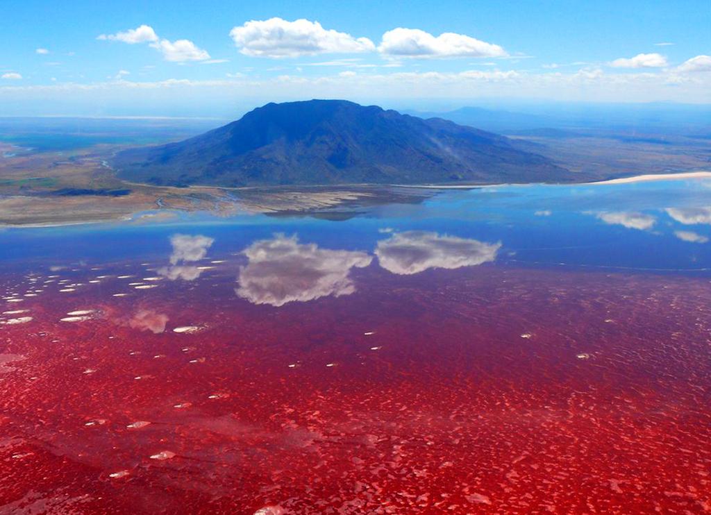 Танзания. Озеро Натрон