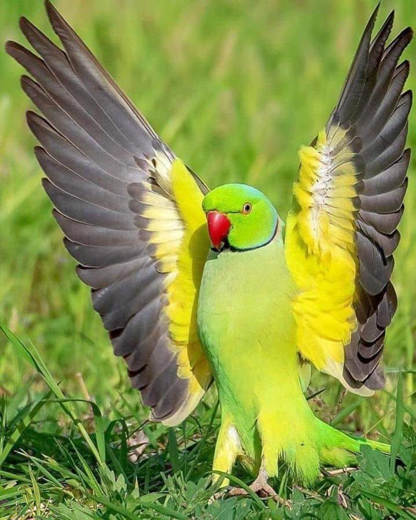 16 самых красивых попугаев в мире