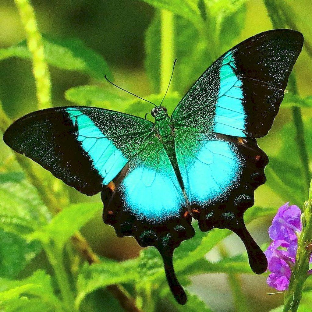 Самые красивые и удивительные бабочки мира