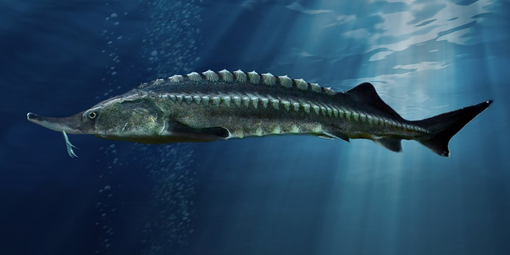 рейтинг самых больших рыб в мире