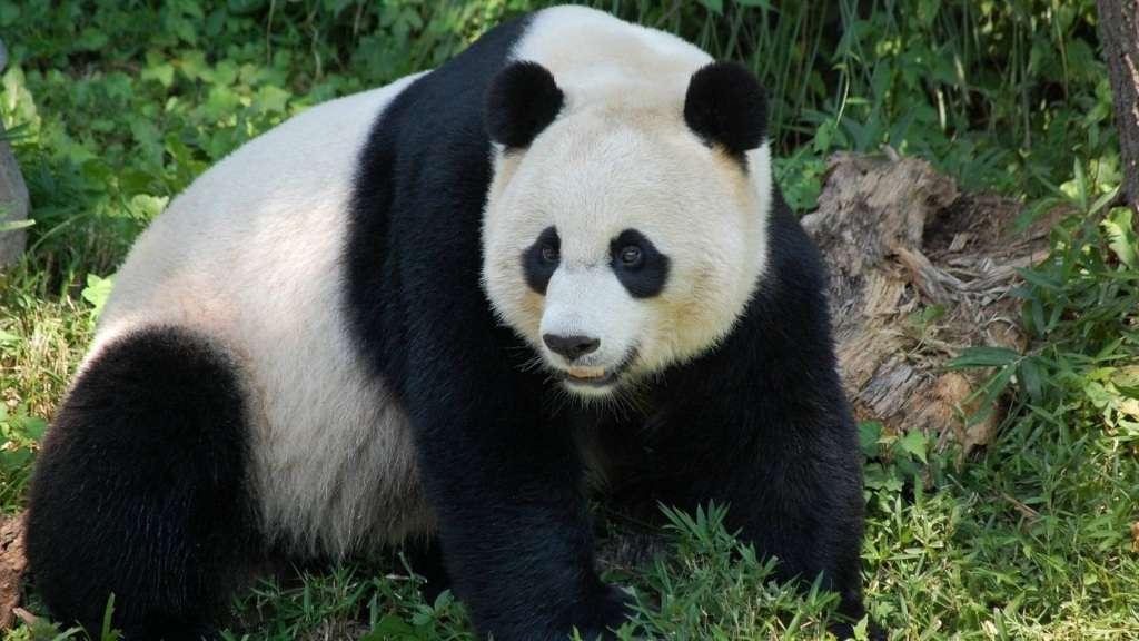 топ 10 больших медведей в мире