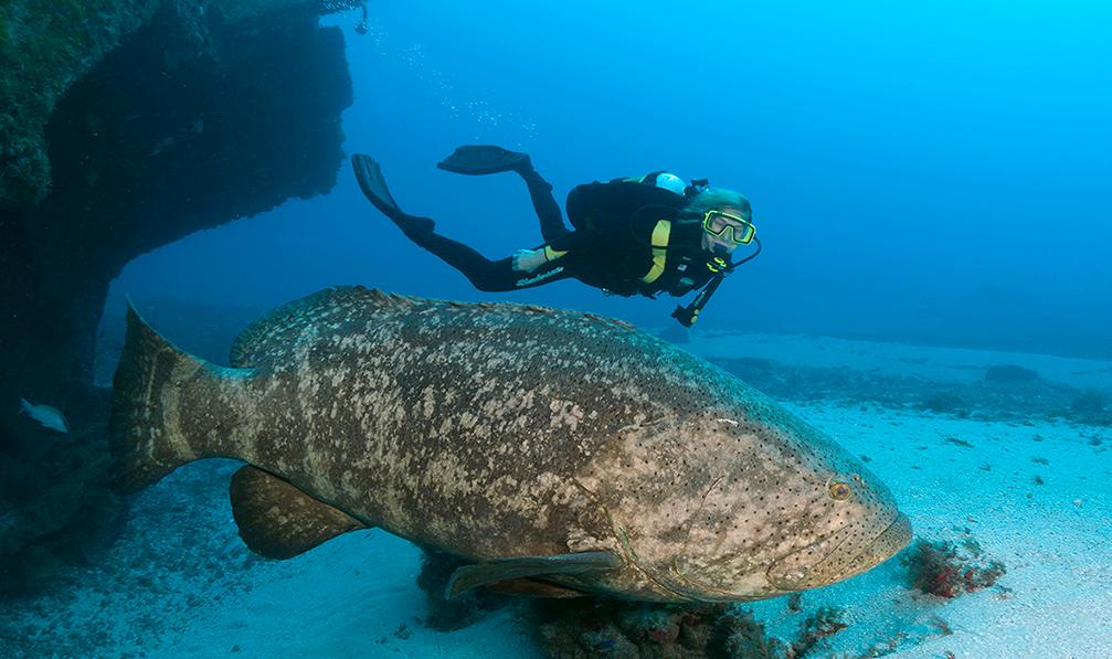 топ самых больших рыб в мире
