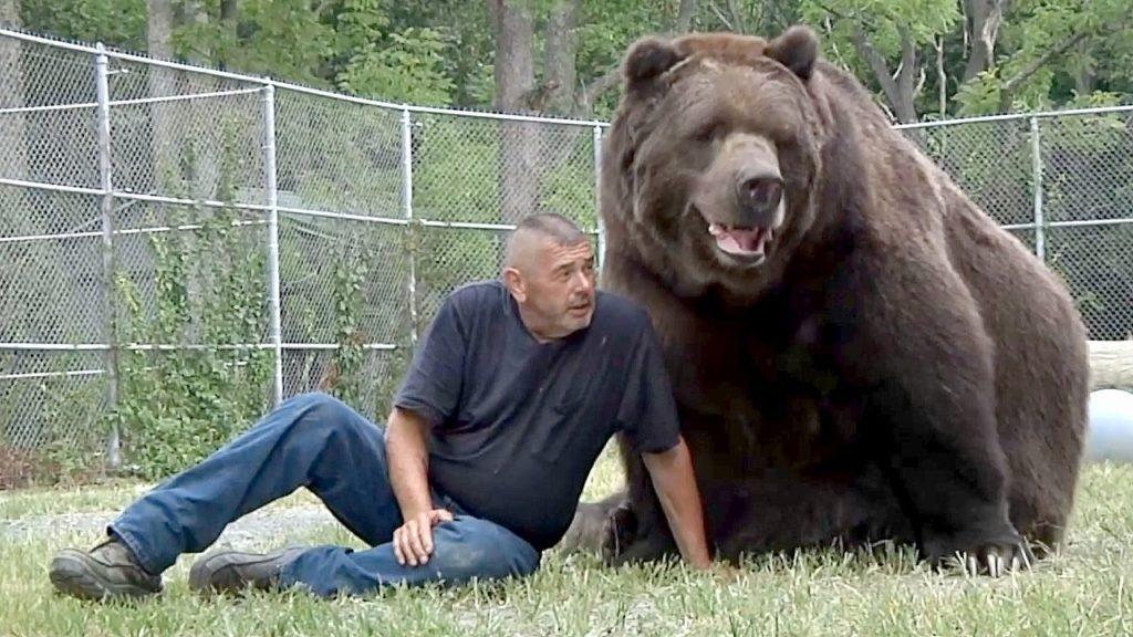 самый огромный медведь в мире