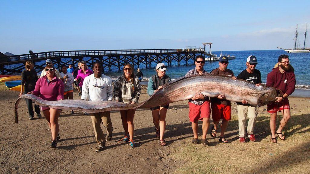 самая длинная рыба в мире