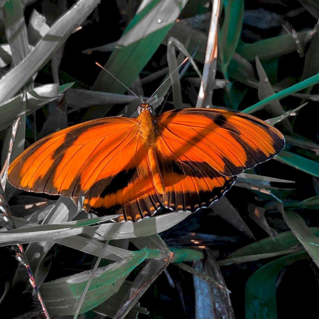 полосатый оранжевый геликонический