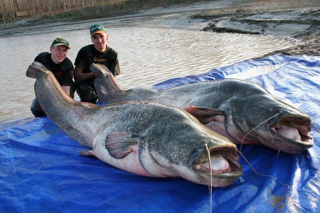 Самые большие рыбы в мире — топ 10