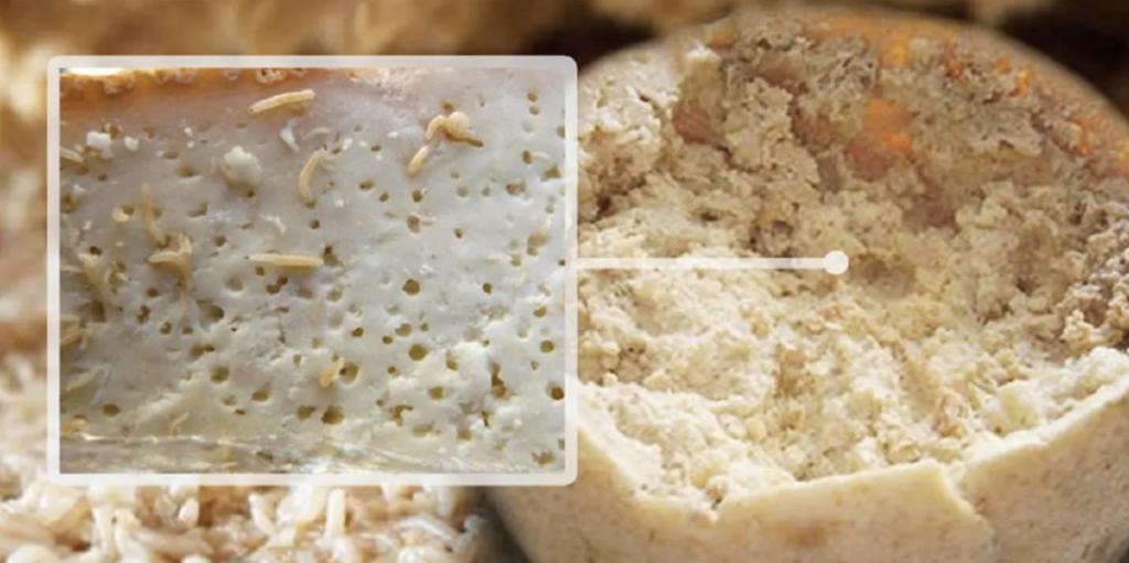 Сыр с личинками