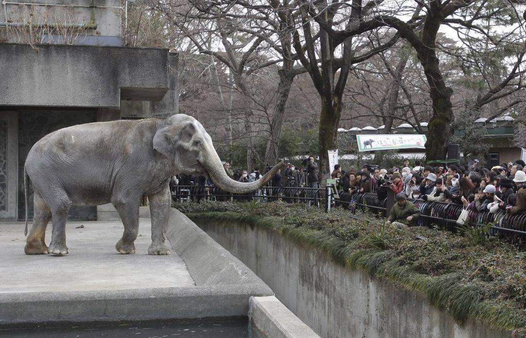 слониха убившая людей