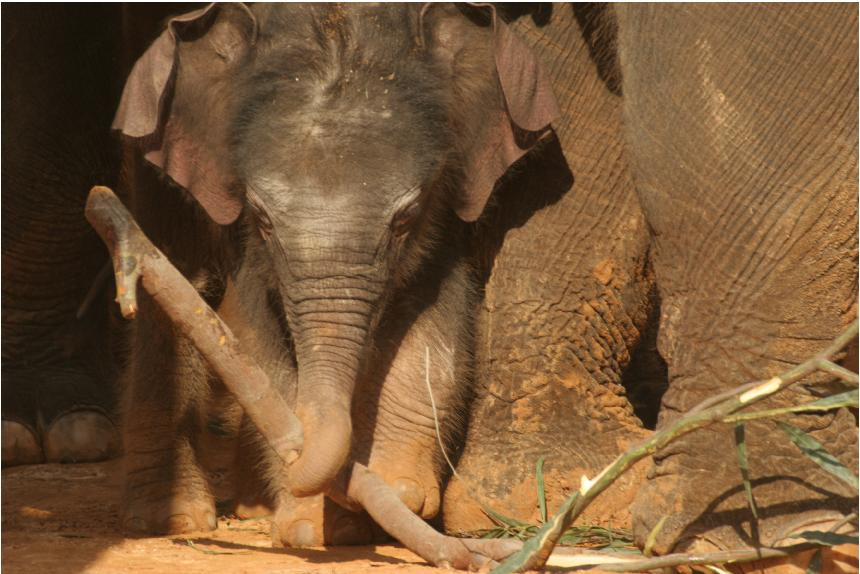 слоненок Габи