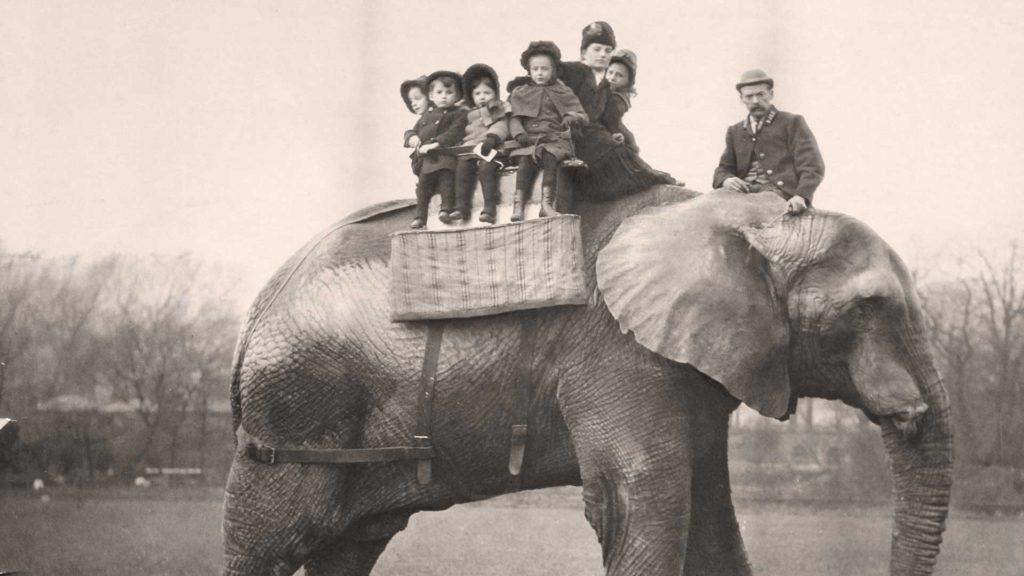 первый цирковой слон