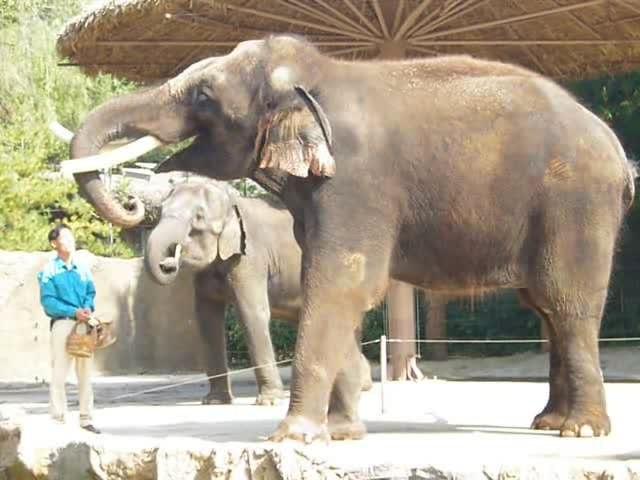 говорящий слон