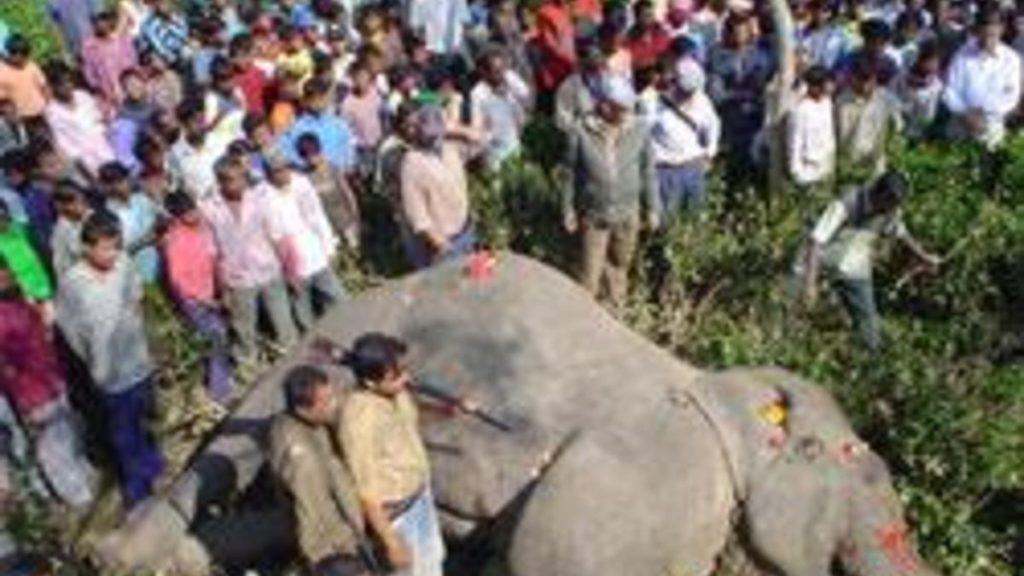 самый знаменитый слон убийца