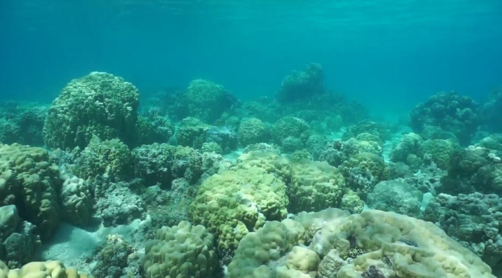 Океанские рифы