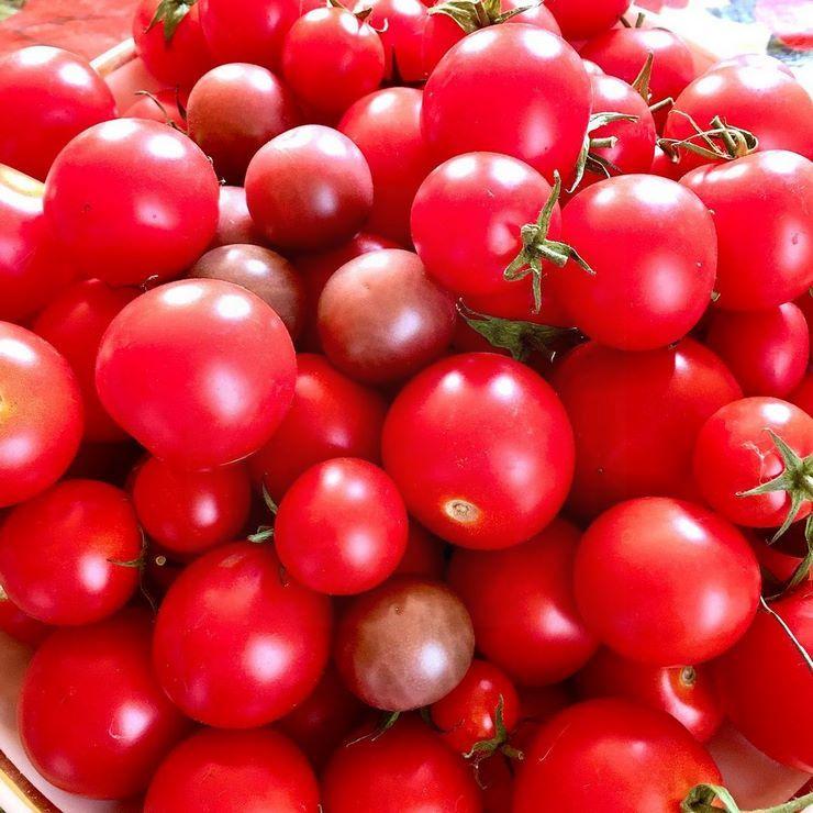 Лучшие сорта помидоров для дачного участка