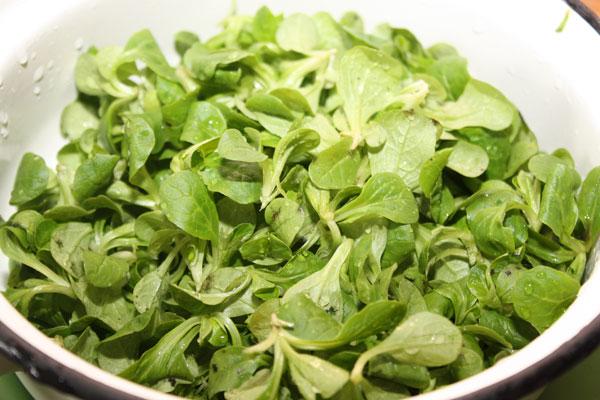 Вымоем салат корн и выложим его в миску.  Говорят, что этот вид салата очень положительно влияет на мужское здоровье :)