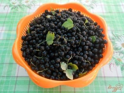 Свежую черную смородину освобождаею от сора, листочков, поврежденных ягодок.