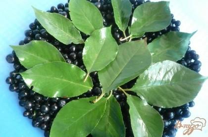 Далее укладываем в таз или в большую миску слоями - слой ягод рябины, слой листьев. Ягод рябины на каждый слой берём примерно 1/5 часть от общего количества, листьев - 1/4 часть.