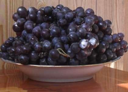 Подготовьте виноград столового сорта «Изабелла». Очистите его от мелкого мусора, листочков и веточек. Удалите также недозрелые ягодки, а также засушенные и гнилые. Для приготовления вина подойдет виноград любого размера. Если ягоды сильно загрязнены, протрите их аккуратно тряпочкой.