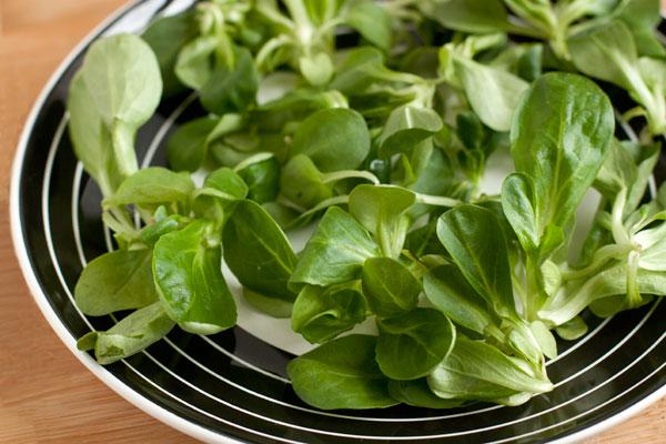 Листья вымытого и высушенного салата разложите на тарелки. Сорт салата может быть разным, на фотографии — корн.