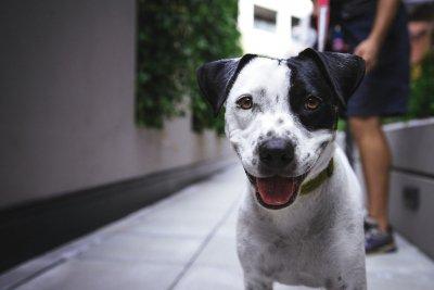 Посещение ветеринара. Как подготовить собаку и себя