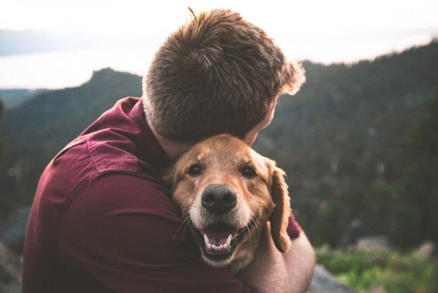Когда приручили собак: споры продолжаются