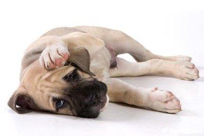 Эфирные масла и их действие на собак
