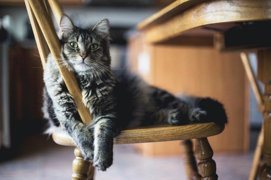 Настоящая причина аллергии на кошек
