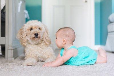 Как познакомить собаку и младенца