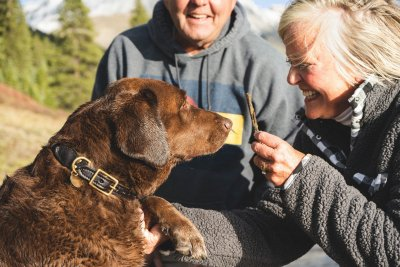 Собака – ключ к вашему здоровому сердцу