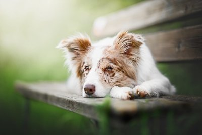 Рак у собак передается половым путем