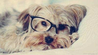 Рассчитайте возраст собаки по новой улучшенной формуле