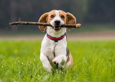 Дрессировка щенков. Основы обучения