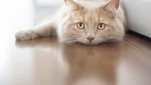 Эфирные масла и их действие на кошек