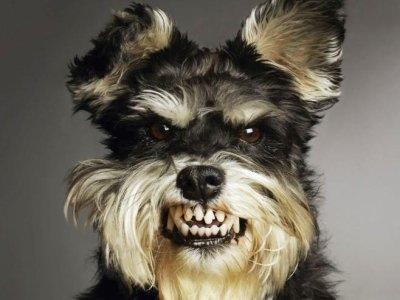 Агрессия у собак и контроль над ней