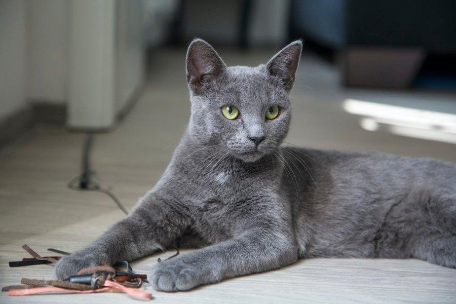 Почему кошка грызет вещи