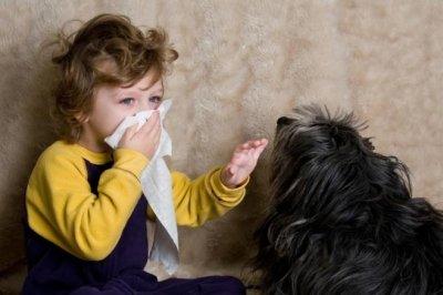 Истинные причины аллергии на животных