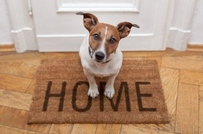О чем нужно подумать прежде, чем завести собаку в квартире
