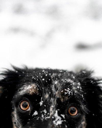 Правила ухода за собакой зимой