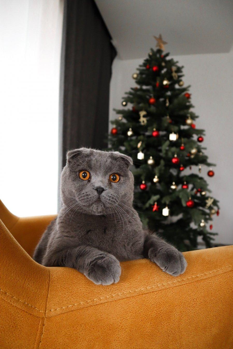 Безопасный новый год для кота