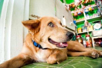 Первая помощь собаке при отравлении