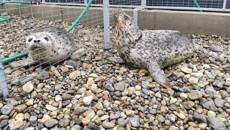 Дом, где спасают тюленей