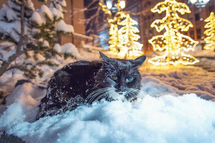 Снежный день кота Пусейро