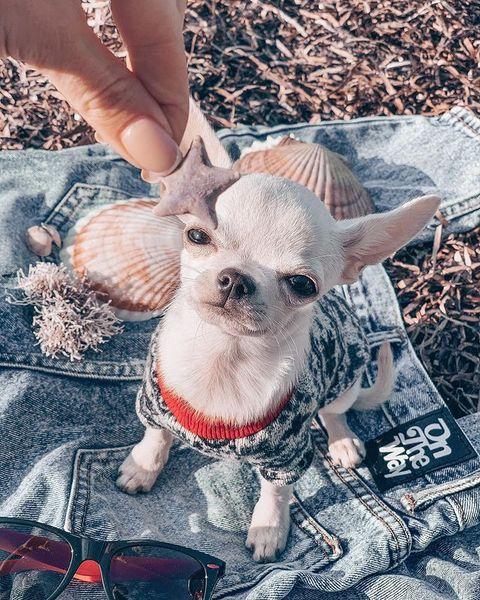 Блогеры с лапками: приморские звёзды Instagram и TikTok