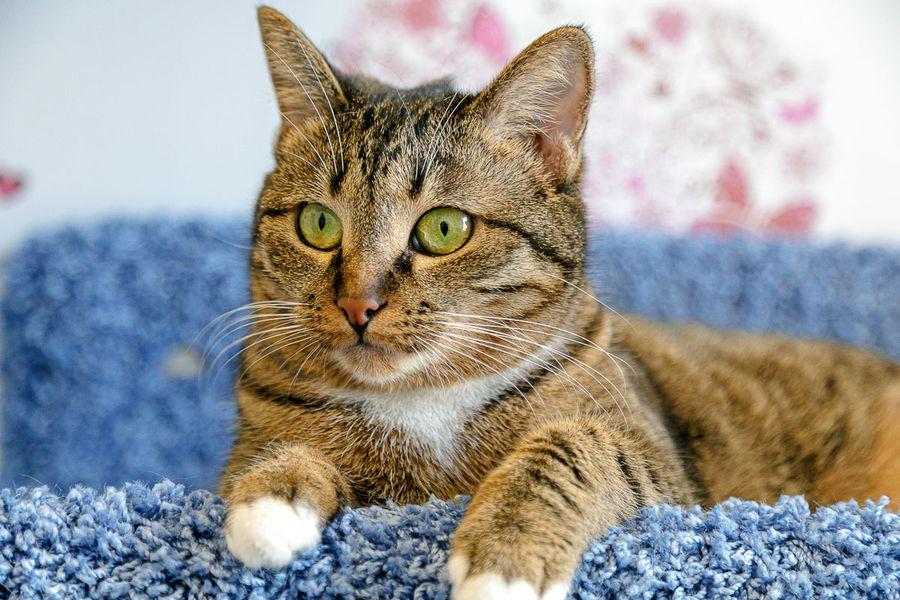 Первое марта – День кошек!