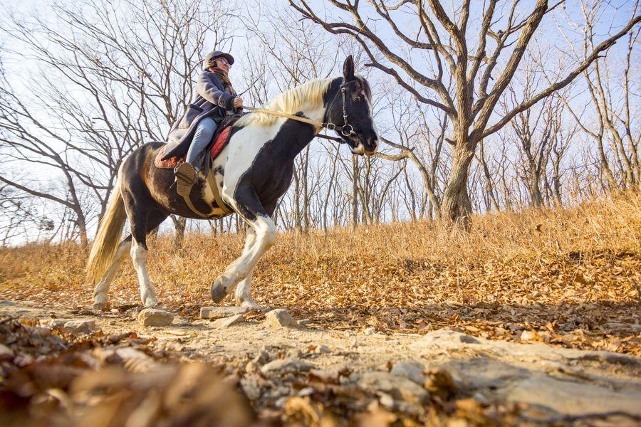 «Коня на скаку»: как перебороть страх лошадей и прокачать тело