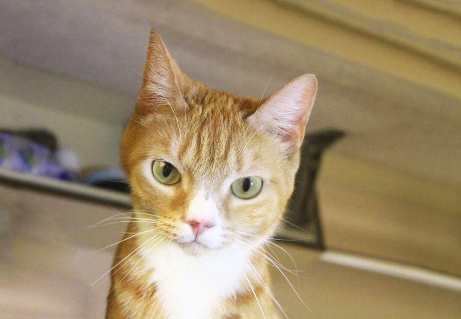 Владивосток-Москва и обратно: кот Зайка и его хозяйка